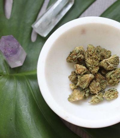Namaste Wappa - High-THC Hybrid Cannabis Strain - Dried Bud in a Bowl