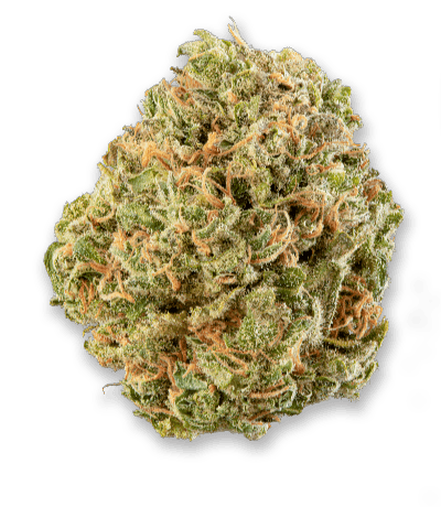 Namaste MK Ultra Cannabis Dried Flower - Bud Closeup