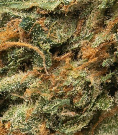 Namaste DM2 strain bud shot macro