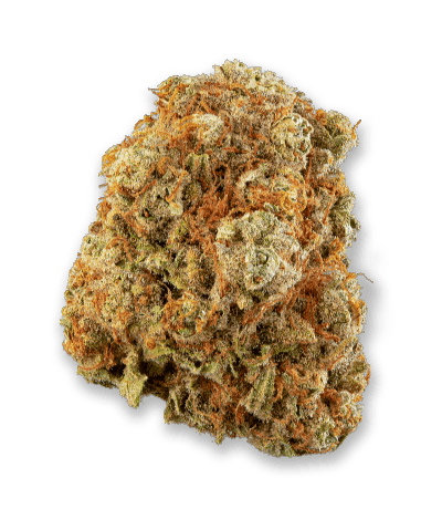 Namaste Sensi Star Cannabis Dried Flower - Bud Closeup